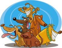 Cães engraçados Imagens de Stock Royalty Free
