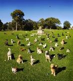 Cães no parque Fotos de Stock Royalty Free