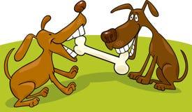 Cães que jogam com osso Fotos de Stock