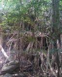 Ces racines se développent profondément images stock