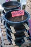 Ces sol et vers de terre de réservoir de vente Image libre de droits