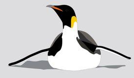 Cesarza pingwin ono ślizga się na swój brzuchu Zdjęcia Royalty Free