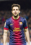 Cesc fabregas Royalty Free Stock Images