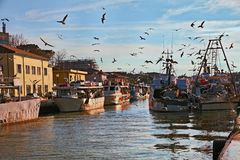 Cesenatico, Emilia Romagna, Italien: Fischerboote mit Seemöwen f lizenzfreie stockfotos