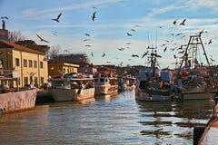 Cesenatico Emilia Romagna, Italien: fiskebåtar med seagulls f royaltyfria foton
