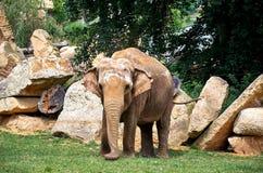 cesky捷克krumlov中世纪老共和国城镇视图 布拉格 布拉格动物园 大象 2016年6月12日 免版税库存照片