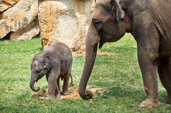 cesky捷克krumlov中世纪老共和国城镇视图 布拉格 布拉格动物园 婴孩大象一点 2016年6月12日 免版税库存照片