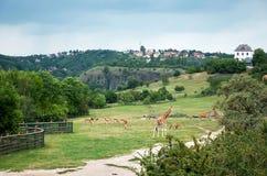 cesky捷克krumlov中世纪老共和国城镇视图 布拉格 布拉格动物园 长颈鹿 2016年6月12日 免版税库存图片