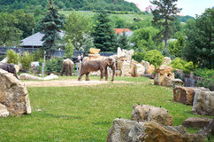 cesky τσεχική πόλης όψη δημοκρατιών krumlov μεσαιωνική παλαιά Πράγα Ζωολογικός κήπος της Πράγας Ελέφαντες 12 Ιουνίου 2016 Στοκ Εικόνες