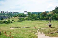 cesky τσεχική πόλης όψη δημοκρατιών krumlov μεσαιωνική παλαιά Πράγα Ζωολογικός κήπος της Πράγας giraffes 12 Ιουνίου 2016 Στοκ φωτογραφίες με δικαίωμα ελεύθερης χρήσης