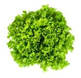 Cespo di insalata di Batavia da sopra su fondo bianco Fotografia Stock