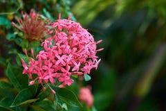 Cespugli con i fiori porpora immagini stock