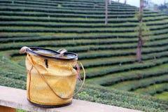 Cespugli del tè e un canestro tradizionale Fotografie Stock