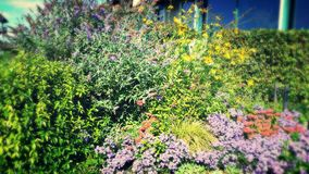Cespugli del Wildflower Fotografie Stock