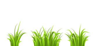Cespugli dell'erba tre Immagini Stock Libere da Diritti
