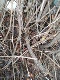 cespugli della foresta della Autunno-primavera Albero cespuglio Foresta fotografia stock libera da diritti