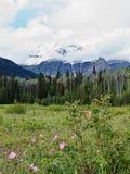 Cespugli delle rose selvatiche al piede del supporto Robson immagini stock libere da diritti