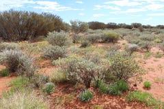 Cespugli e fiori nell'entroterra australiana Fotografia Stock