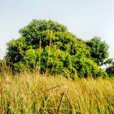 Cespugli ed alberi Fotografia Stock