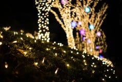Cespugli ed alberi delle luci di Natale Fotografia Stock