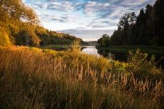 Cespugli ed erba, illuminati dal sole vicino al fiume a sunse Immagine Stock Libera da Diritti