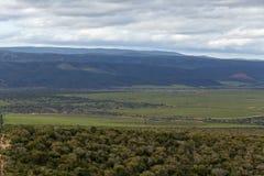 Cespugli, erba verde e montagne Immagine Stock