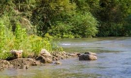 Cespugli lungo le banche, Jordan River immagine stock
