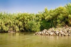Cespugli lungo le banche, Jordan River fotografia stock