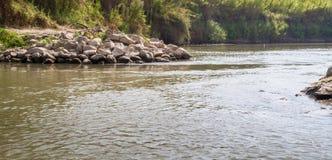 Cespugli lungo le banche, Jordan River immagine stock libera da diritti