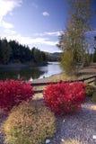 Cespugli rossi e una rete fissa da un lago. Immagine Stock