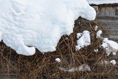 Cespugli sotto la neve immagini stock libere da diritti