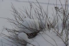 Cespugli sotto la neve fotografia stock libera da diritti