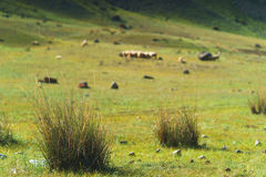 Cespugli verdi di erba sul pendio di collina Immagini Stock