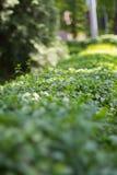 Cespugli verdi nel parco della città Fotografia Stock Libera da Diritti
