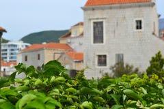 Cespugli verdi nella priorità alta Costruzioni antiche Defocused con un tetto piastrellato rosso Vecchia città Budua montenegro Fotografia Stock Libera da Diritti