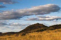 Cespuglio africano sotto cielo blu. Fotografia Stock