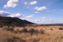 Cespuglio africano sotto cielo blu. Immagine Stock Libera da Diritti