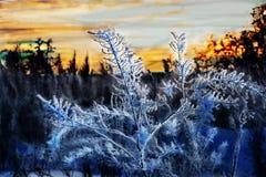 Cespuglio congelato al tramonto, inverno in Russia fotografia stock libera da diritti