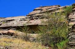Cespuglio del cratego & x28; lat Crataegus& x29; crescendo sotto una roccia Immagini Stock