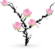 Cespuglio del prugnolo con le rose Fotografie Stock Libere da Diritti