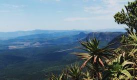 Cespuglio dell'aloe sui precedenti di una valle della montagna Fotografie Stock Libere da Diritti