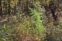 Cespuglio della foresta Fotografie Stock