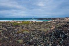 Cespuglio della spiaggia Fotografie Stock Libere da Diritti