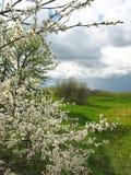 Cespuglio di fioritura contro il cielo scuro fotografie stock libere da diritti