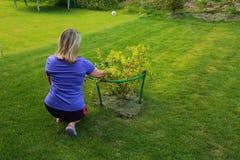 Cespuglio di uva spina vicino femminile fotografie stock