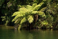 Cespuglio indigeno al bordo dei laghi fotografia stock