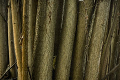Cespuglio nocciola della foresta Immagini Stock Libere da Diritti