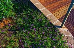 Cespuglio porpora del fiore in un ambiente urbano fotografia stock libera da diritti