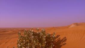 Cespuglio verde che cresce sulle colline sabbiose in deserto selvaggio Piante verdi in deserto sabbioso video d archivio