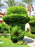 Cespuglio verde divertente in cappello con gli occhi e la bocca immagini stock